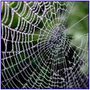 Belajar dari Laba-laba